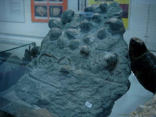 gvi-ausstellung-fossilien 13