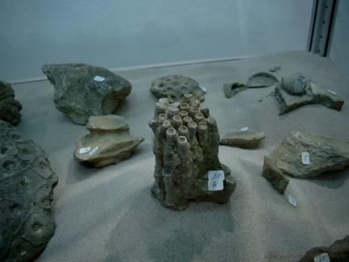 gvi-ausstellung-fossilien 14