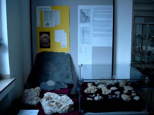 gvi-ausstellung-fossilien 20