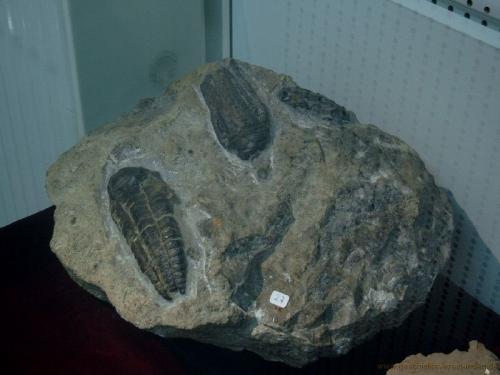 gvi-ausstellung-fossilien 23