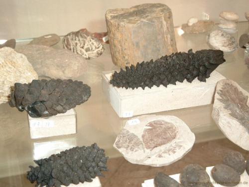 gvi-ausstellung-fossilien 27