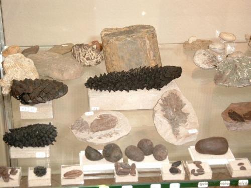 gvi-ausstellung-fossilien 34