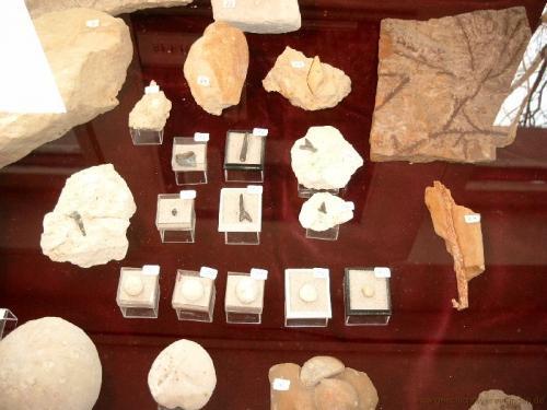 gvi-ausstellung-fossilien 38