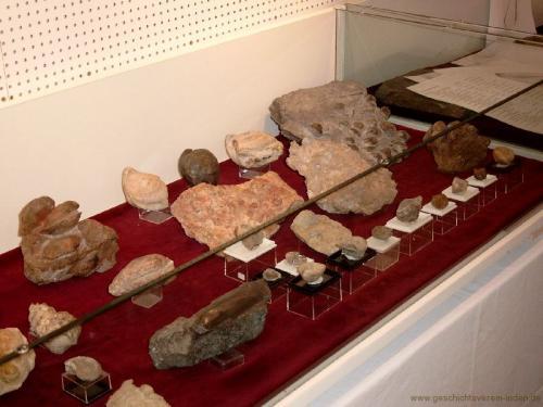 gvi-ausstellung-fossilien 7