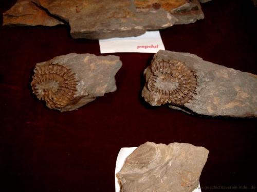 gvi-ausstellung-fossilien 8