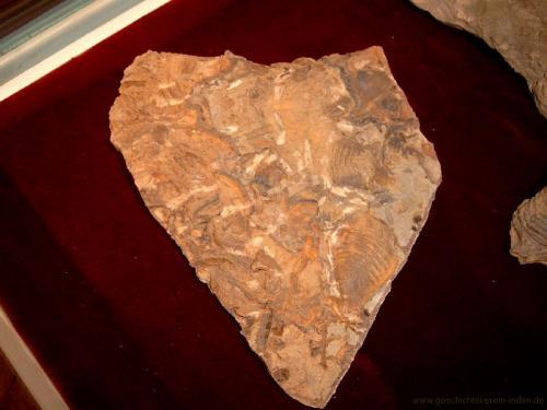 gvi-ausstellung-fossilien 9